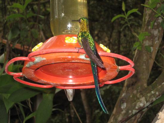 Inkaterra Machu Picchu Pueblo Hotel: More hummingbirds
