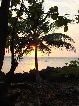Anthony's Key Resort: Sunset in Palm Tree - PARADISE!