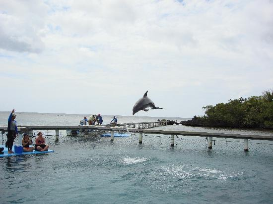 Anthony's Key Resort: Enteracting with dolphin before dive