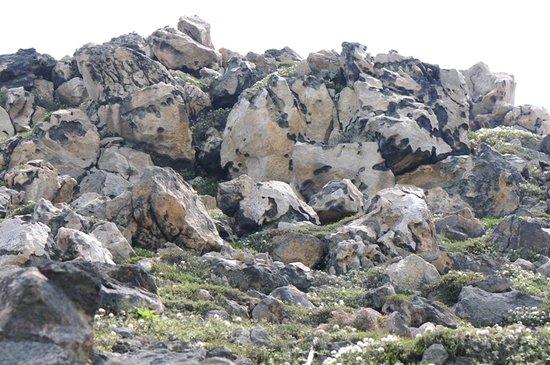 Hakodate, Japón: 高山植物の咲く岩山