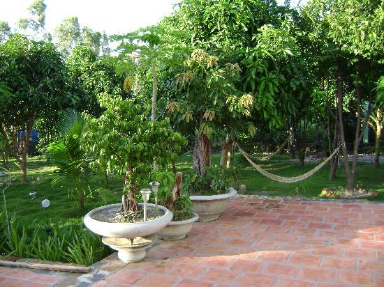 Mangogarden: Mango garden