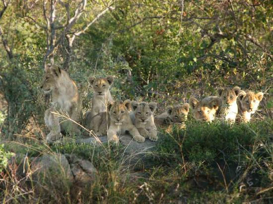Pondoro Game Lodge: cubs