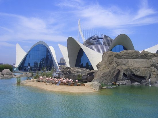 Valencia, Spain: fenicotteri all'interno dell'oceanografico