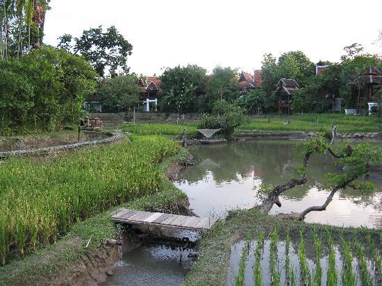 The Dhara Dhevi Chiang Mai: Rice Paddies
