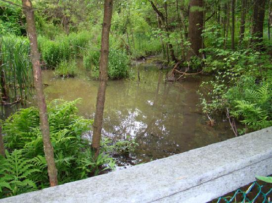 Quarry Run Dog Park: Fenced off swamp area
