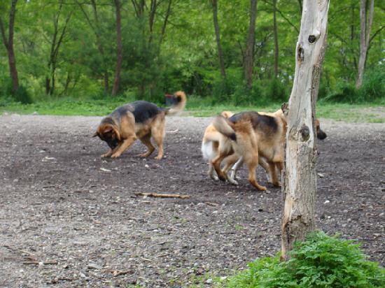 Quarry Run Dog Park: Dogs having fun