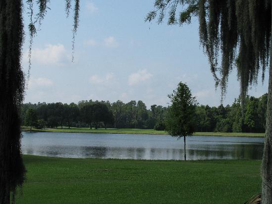 Innisbrook, A Salamander Golf & Spa Resort: golf course