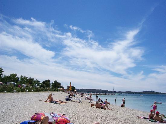 Fazana, Κροατία: beech