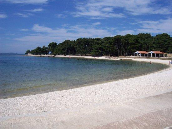 Fazana, Croacia: beech