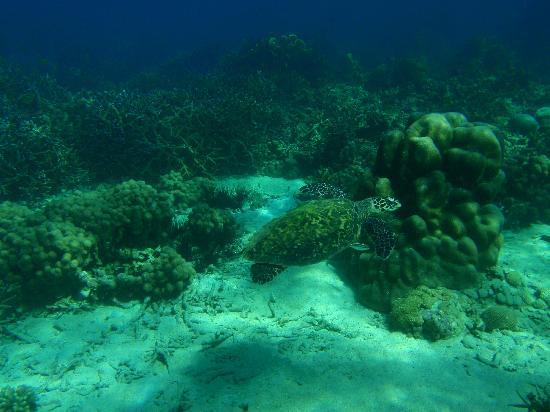 Doany Beach: Sea Turtle!