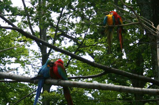 Catoctin Wildlife Preserve and Zoo: Macaws ( parrots)