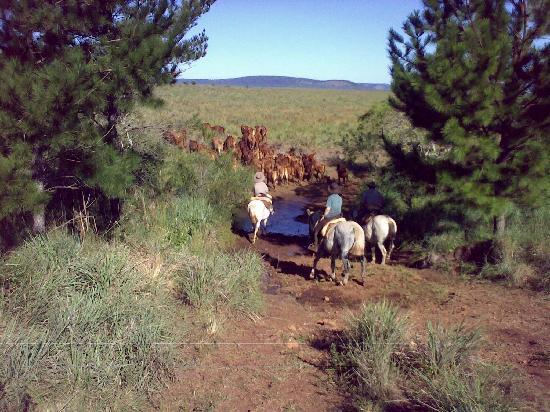 Estancia Santa Cecilia: Horse Riding