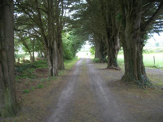 Cherryville House: Drive leading to the road