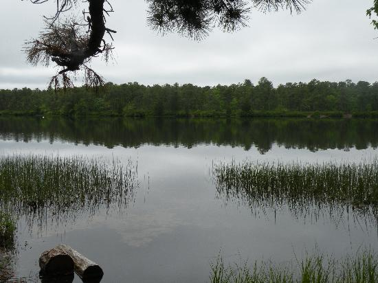 New Jersey: Lake Absegami,Bass River State Forest