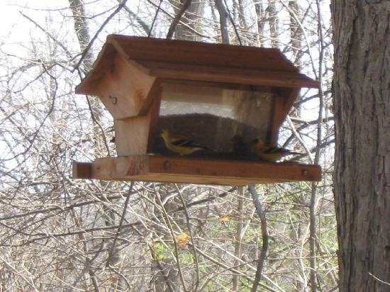 Ash Ridge Cabins: Birfeeder with Goldfinch on the back deck