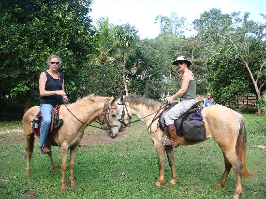 Moonracer Farm Lodging & Tours: A couple of the trusty steeds