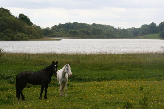 Castle Leslie Estate: Horses relaxing at the lake