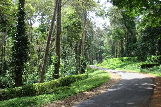 Coorg - Tata coffee plantations - Picture of Coorg ...