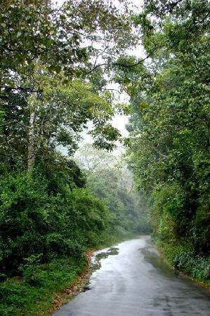 Kodagu (Coorg), India: Coorg - lush plantation road near Siddapur