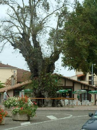 Biscarrosse, France : L'Orme
