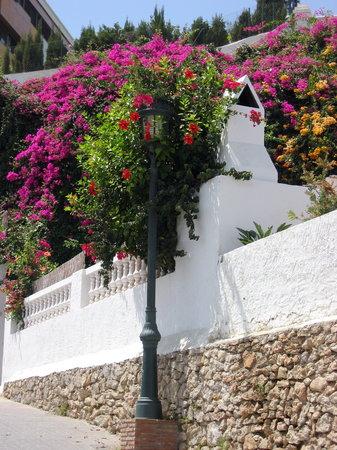 Nerja, Spanien: bougainvillier en fleurs