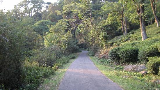 Hotel White Haven Palace Estate: walking path in the estate