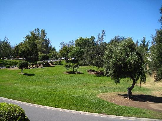 Riviera Oaks Resorts : View Across Street