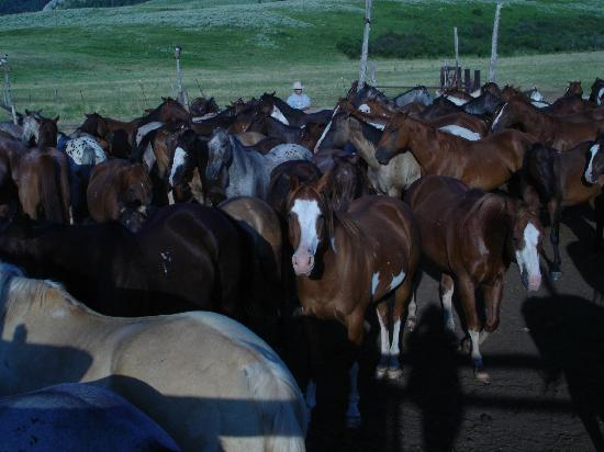 Lovell, WY: Which ones will go to work today?
