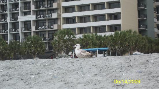 The Breakers Resort Seagull Our Room Right Behind It
