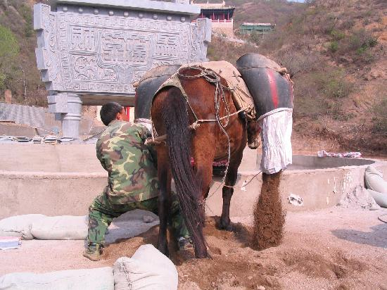 Hebei, China: A horse being used to carry earth for upgrading Hot Springs area (May 2009)