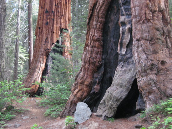 Sequoia and Kings Canyon National Park, Kalifornia: I loved them as well