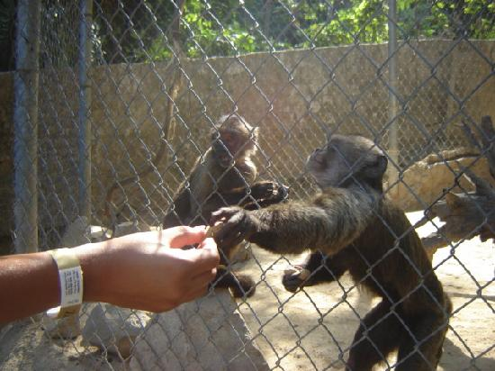 feeding monkeys Mazuri® primate food is quality feed including monkey food and feed for other primates learn about our primate feed products today.