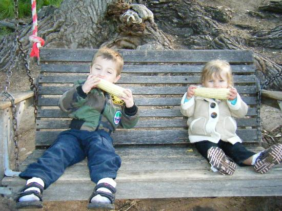 Lo Lo Mai Springs: Kids eating corn on the tree swing