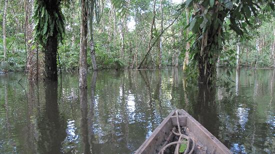 Amazonia Expeditions' Tahuayo Lodge: Water World
