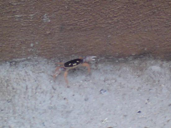 Casa Pan de Miel: Mazunte crab