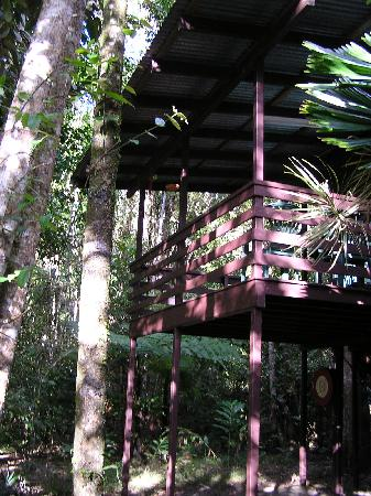 Chambers Wildlife Rainforest Lodges: Our rainforest lodge
