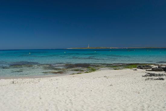 Insotel Punta Prima Resort & Spa : The beach