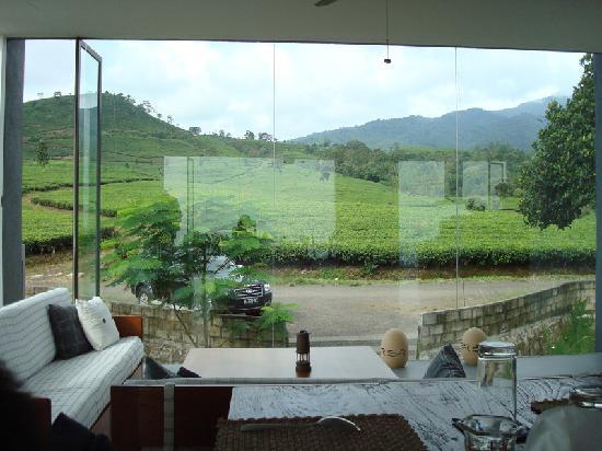 Tea Garden Resort Bandung : Drinking Tea while enjoying the view