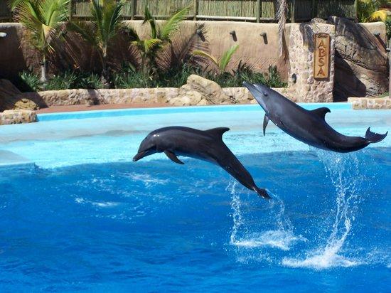 Дурбан, Южная Африка: uShaka Marine World - 2005