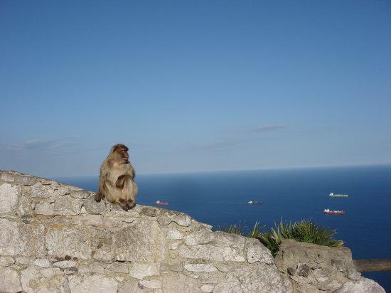 Γιβραλτάρ: el monito no le tiene miedo a las alturas