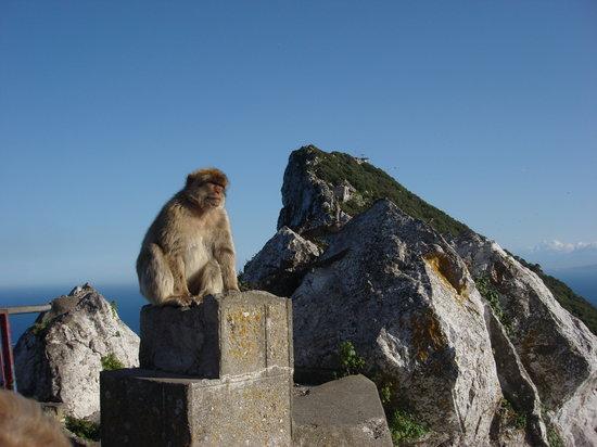 Gibraltar: los monos no nos tienen miedo