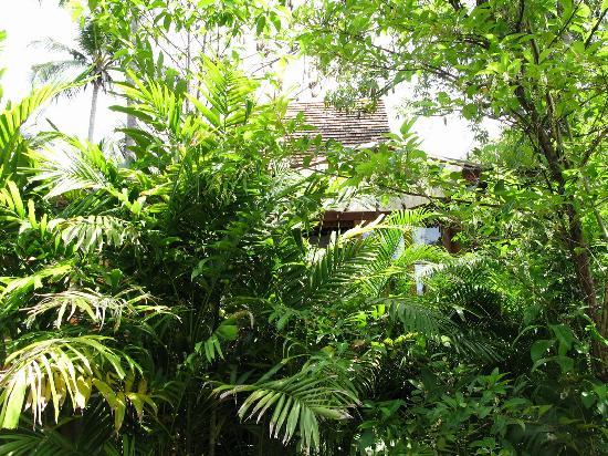 Santhiya Koh Phangan Resort & Spa: Our villa from hotel walkway - really lush tropical gardens!