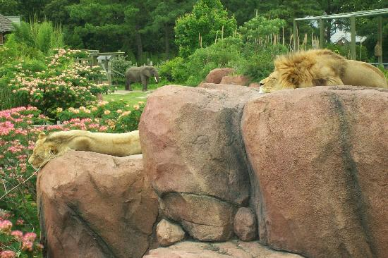 Virginia Zoo: lions & elephant