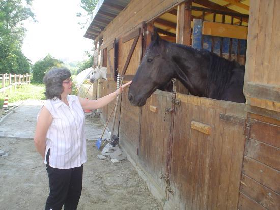 Agriturismo La Cascina dei Cavalli: un cavallo
