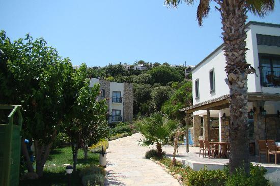 3 S Beach Club: Hotel garden