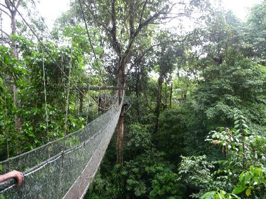 Mulu World Heritage Area canopy walk way & canopy walk way - Picture of Mulu World Heritage Area Miri ...