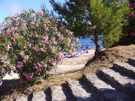 Palmasera Village Resort : scalinata x la spiaggia