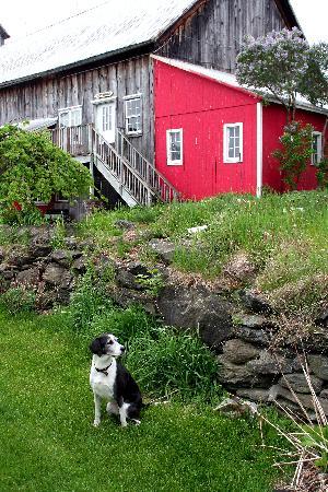 Inn At Buck Hollow Farm: The barn at Buck Hollow Inn and our dog