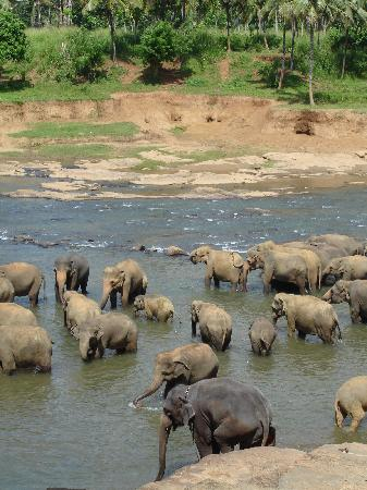 Jetwing Beach: The Elephant Orphanage