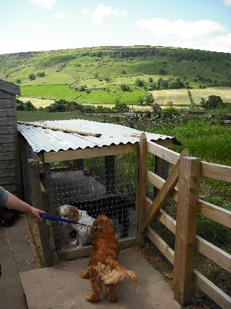 Five Acre View : dotty and willow with ozzy, and that view!